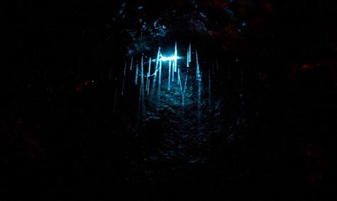 glowworm closeup