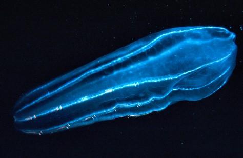 Zooplankton2_300