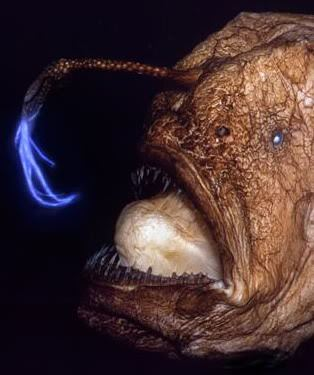 anglerfish with bioluminescent bulb hanging from forehead