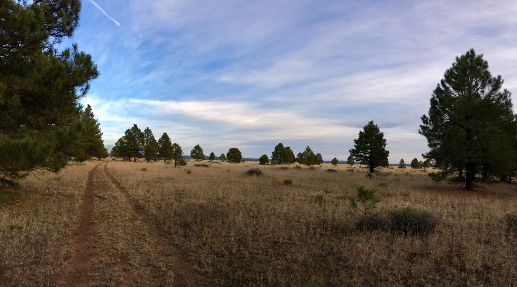 tire tracks in the dirt leading along the ponderosa forest and open meadow with partly cloudy skies