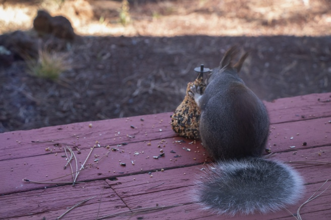 a squirrel siting on a red porch eating at a seed bell
